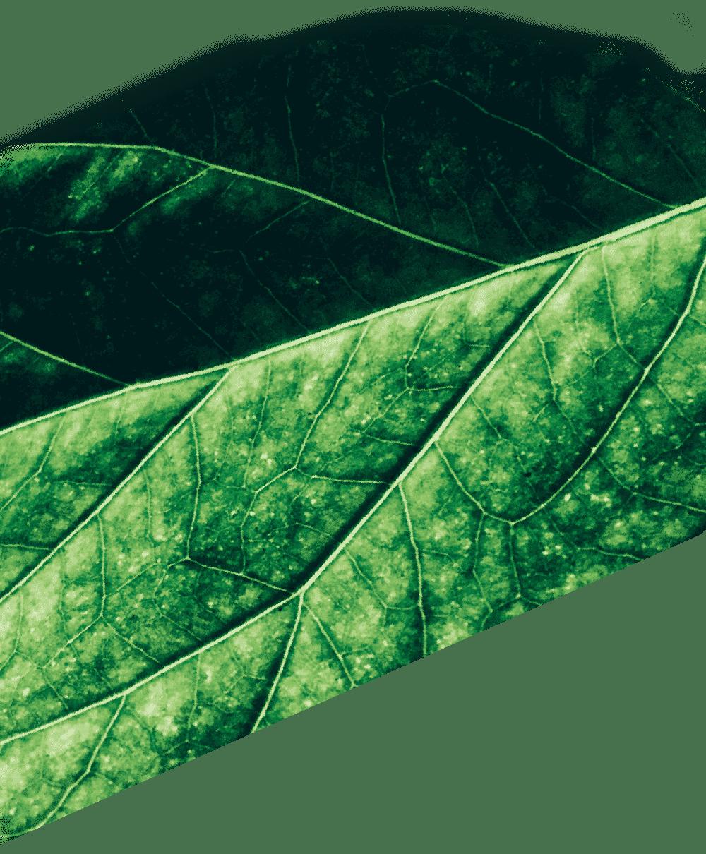 葉っぱの背景