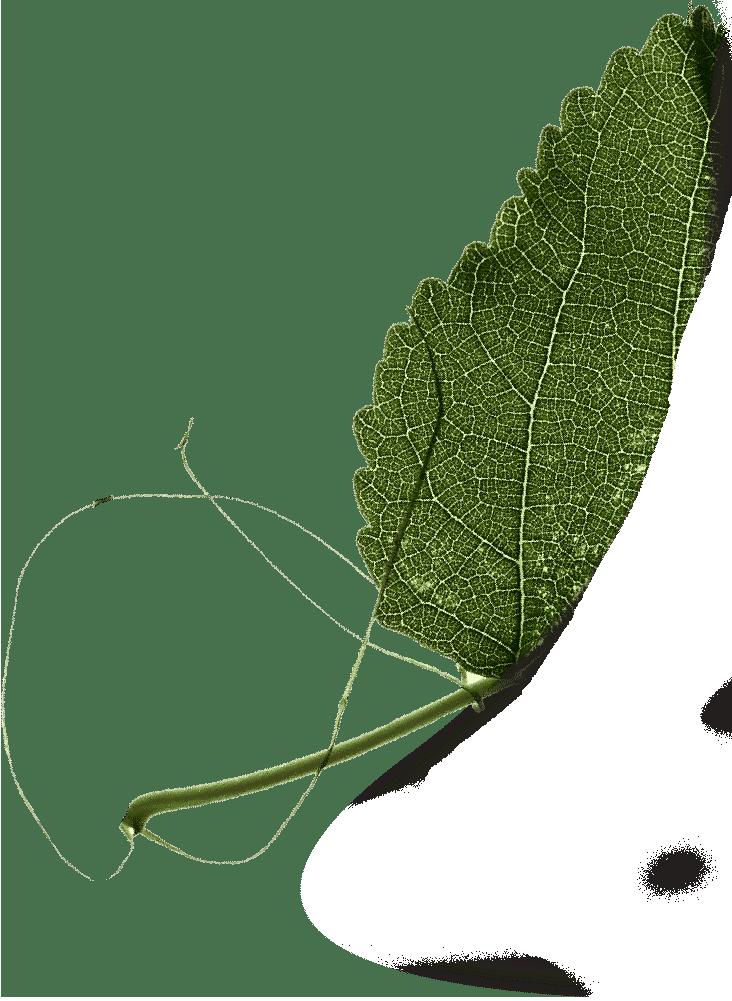 葉っぱの背景2